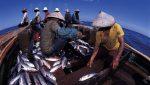 Maluku Bakal Jadi Lumbung Ikan Nasional, Ini Beragam Infrastruktur yang Dibangun